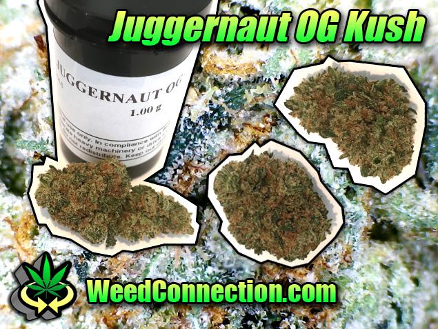 #Juggernaut #OGKush
